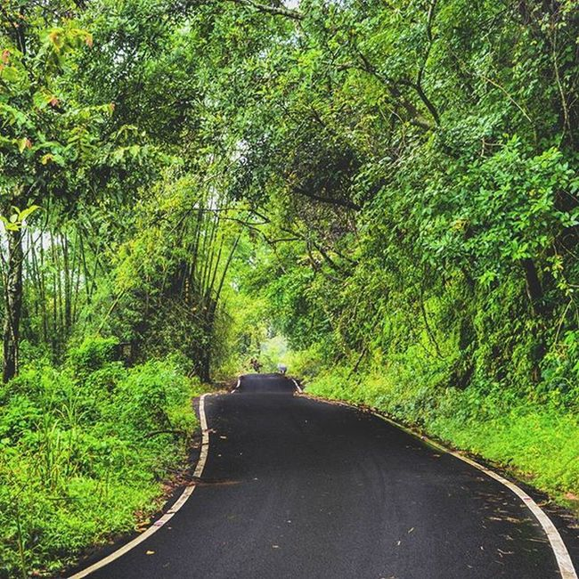 Cant take off eyes from this mesmerising Greenery after Heavy rain. The calmness of forest after rain.<3 Unexplainable. Best feeling ever. TBT  Roadtrip Greeenery Kerala Thrissur India