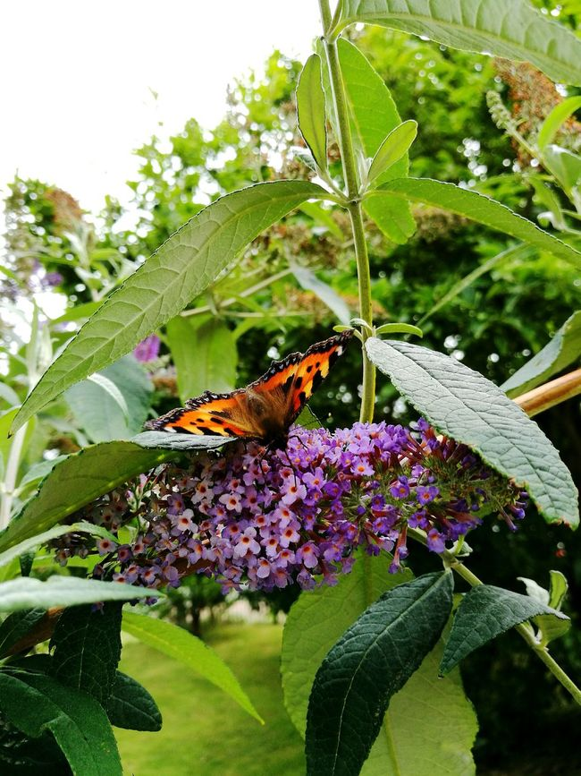 Flower Leaf Animal Themes Close-up Beauty In Nature Plant Purple Green Color Nature Focus On Foreground Day Photooftheday Beautiful Wildlife & Nature Natural Pattern Nature Summer Butterfly - Insect Animal Antenna Butterfly Wildlife One Animal Insect Green Leafs