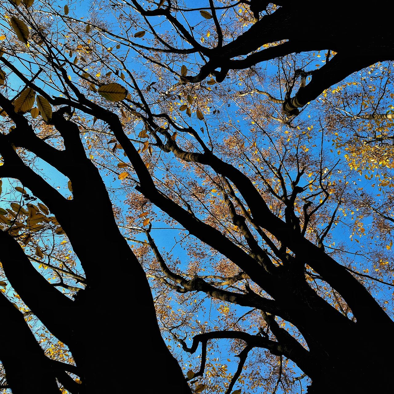 Tree Trees And Sky Tree Silhouette Tree Art Trees And Nature Treetastic Foliage Foliage Tree Low Angle View No People Tree Sky Nature Outdoors Beauty In Nature