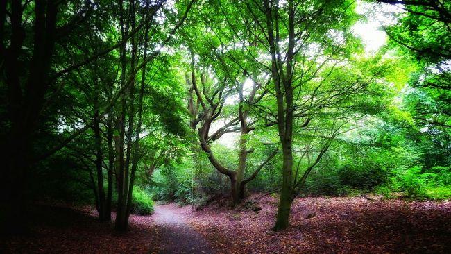 Wood Viersen Fujifilm Finepix SL1000 Germany Eye4photography  Trees Sl1000 Taking Photos Forest Road