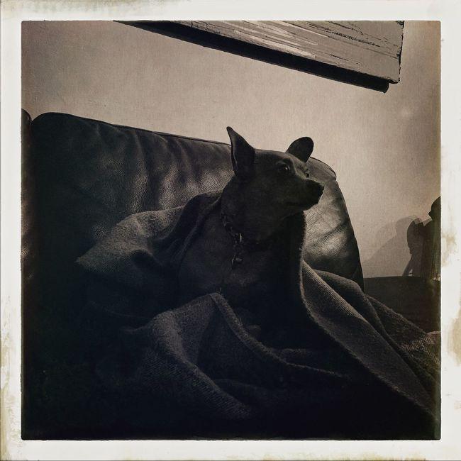 ✨Edie✨ Hipstamatic Johns Uchitel20 Oggl Makebeautiful Chihuahua