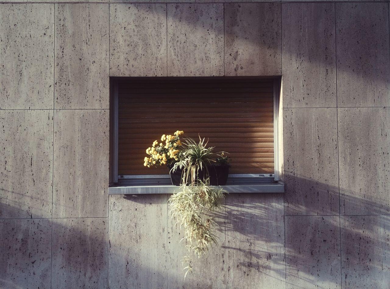 Window Architecture Outdoors Built Structure Paris Flowers Yellow