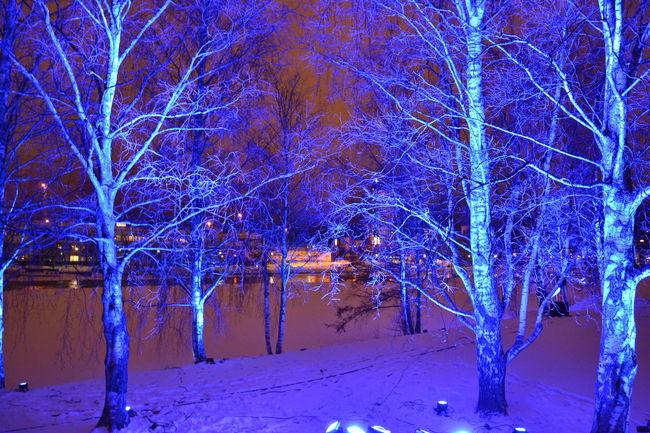Light art in Joensuu Blue Cold Cold Temperature Color Light Colors Light Night Trees Winter