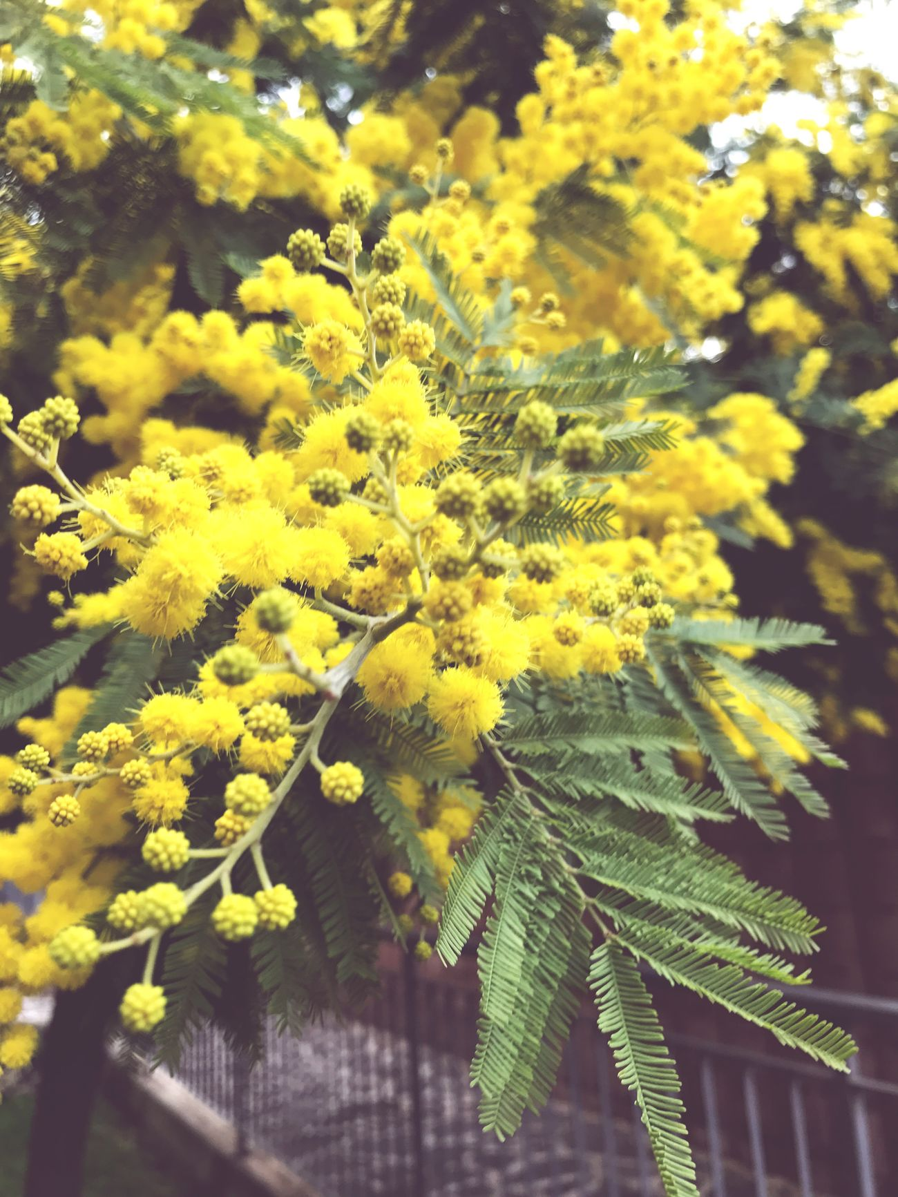 Photographing Green Color Nature Yellow Growth Plant Flower Beauty In Nature Outdoors Day Italy