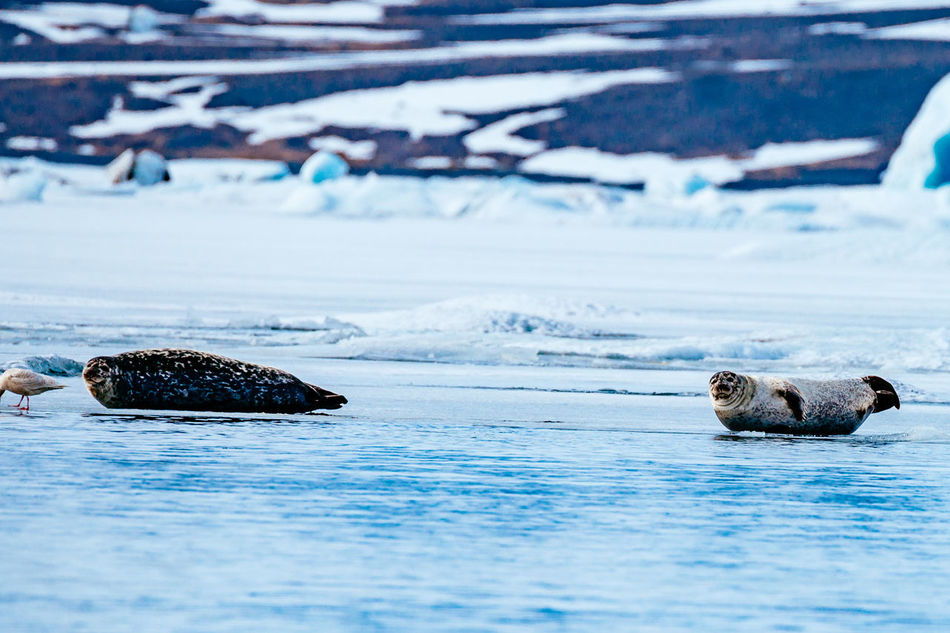 Beautiful stock photos of schildkröte, Animal Themes, Animal Wildlife, Animals In The Wild, Aquatic Mammal