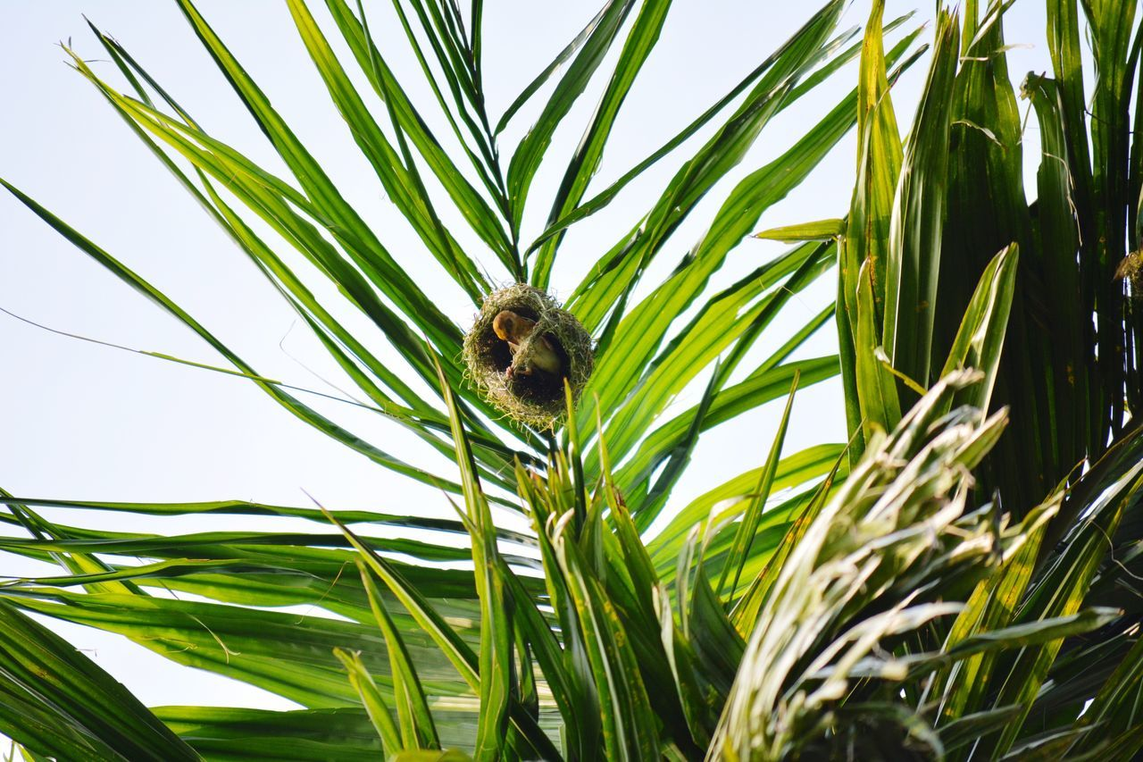 One Animal Green Color Leaf Growth Nature Plant Animal Wildlife Animal Themes Day Animals In The Wild Outdoors Grass No People Palm Tree Close-up Sky Beauty In Nature Bird Mammal