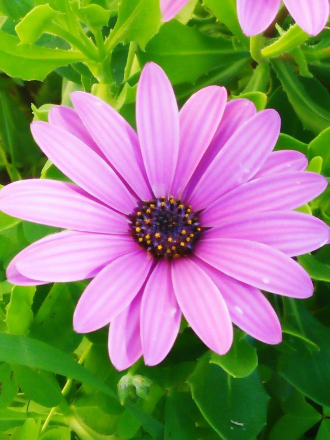 Purple Flower Great Photo Naturesbeauty Check This Out Hello World What A Wonderful World Taking Photos Beutiful View