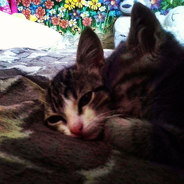 Коты котики звери Природа животные Cats Cat Tomcat Animals