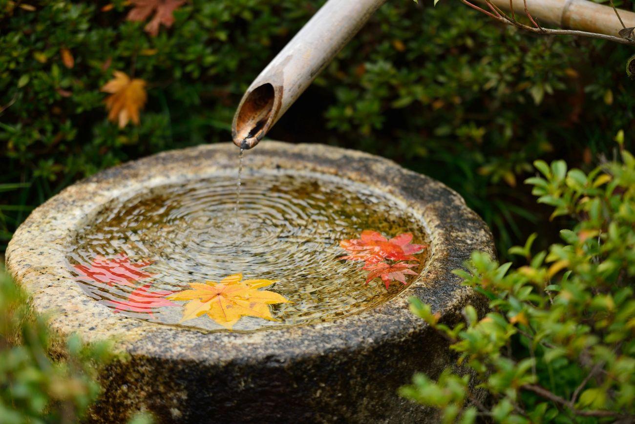 Autumn Japan Sisiodosi Autumn Leaves Autumn🍁🍁🍁 Wabi-sabi Nikon
