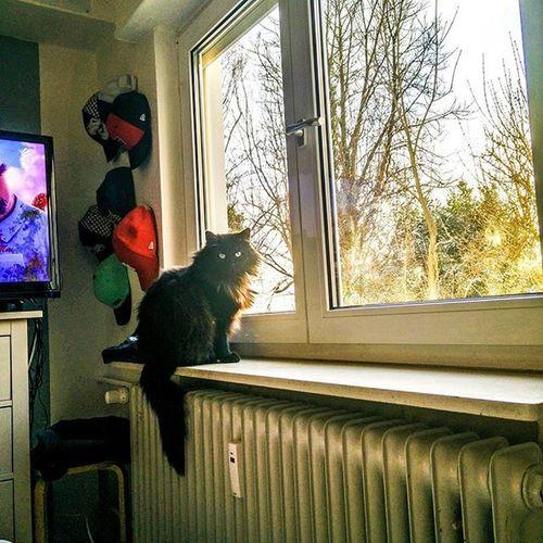 Lazysunday Kittens Chilling Furry Chillaxing Sun