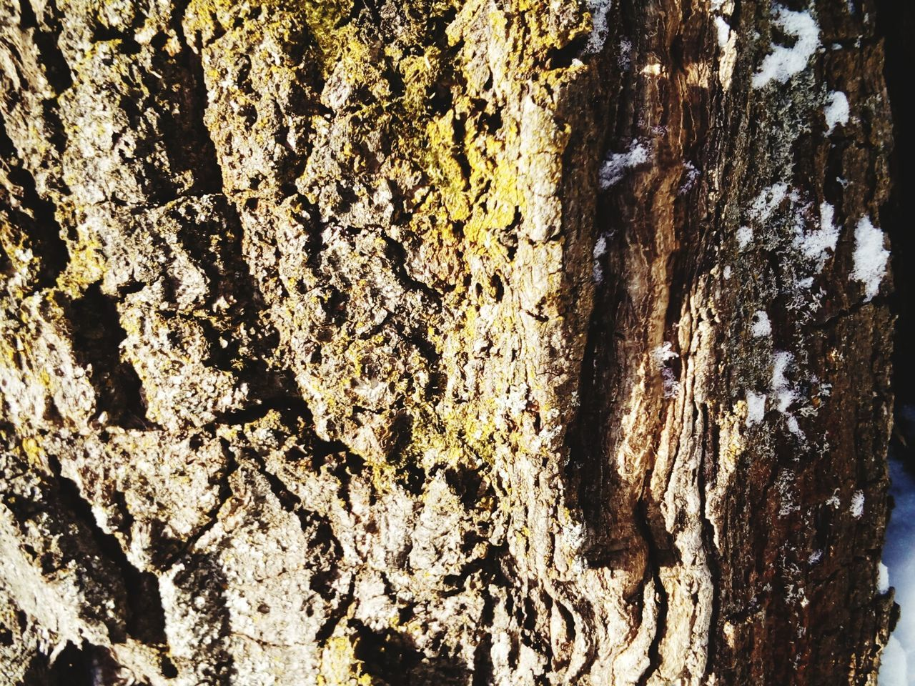 Full Frame Backgrounds No People Close-up Sunlight Nature Textured  Outdoors Day Beauty In Nature Water Silhouette The Great Outdoors - 2016 EyeEm Awards Nature_collection EyeEm Nature Lover Beauty In Nature Nature Branch Tree Trunk Winter Forest Textured  Texrure Textured  Frozen