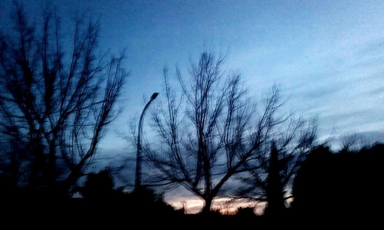 bare tree, animals in the wild, bird, silhouette, animal themes, nature, tree, one animal, animal wildlife, outdoors, sky, low angle view, no people, beauty in nature, night, branch, scenics, bird of prey