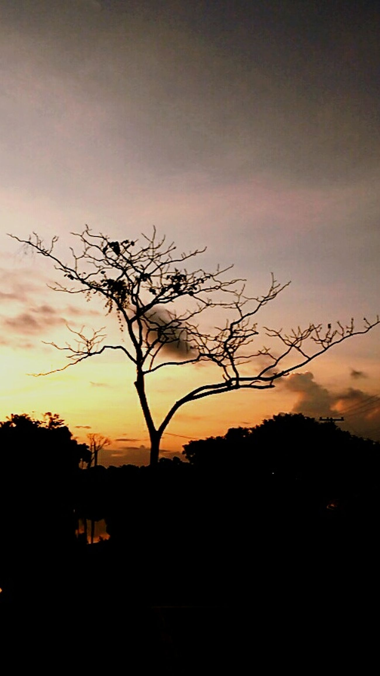 Acre Amazonia Natureza Arvore Céu Por Do Sol UFAC First Eyeem Photo