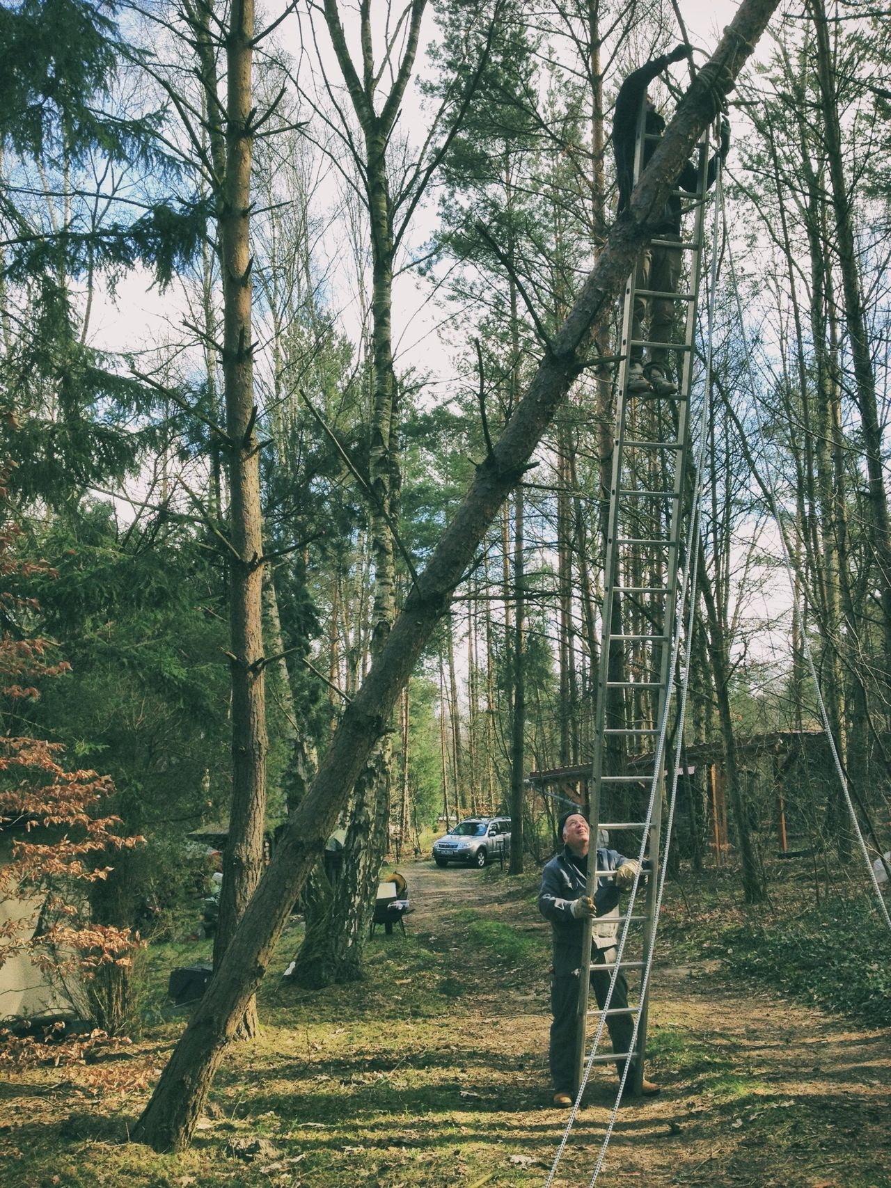 One Day Hanging Out Cut Trees Nature Nature_collection EyeEm Nature Lover Naturelovers Nature Photography Natural Wood Woods Wooden Landscape Landscape_Collection Landscape_photography Landscapes Leiter Light Up Your Life High Walk This Way Green Eye4photography  Urban Urbanphotography Working