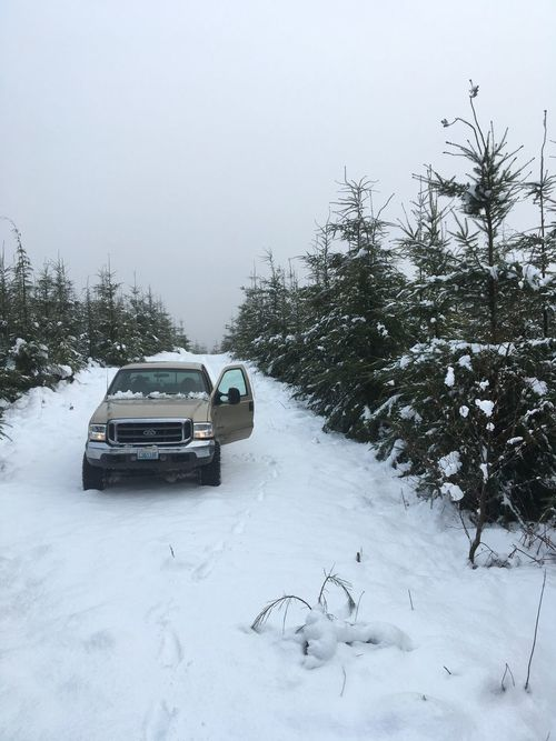 PNW Forest Washington State Outdoors Cold Temperature Snow Winter Weather Nature Beauty In Nature Adventure My Truck