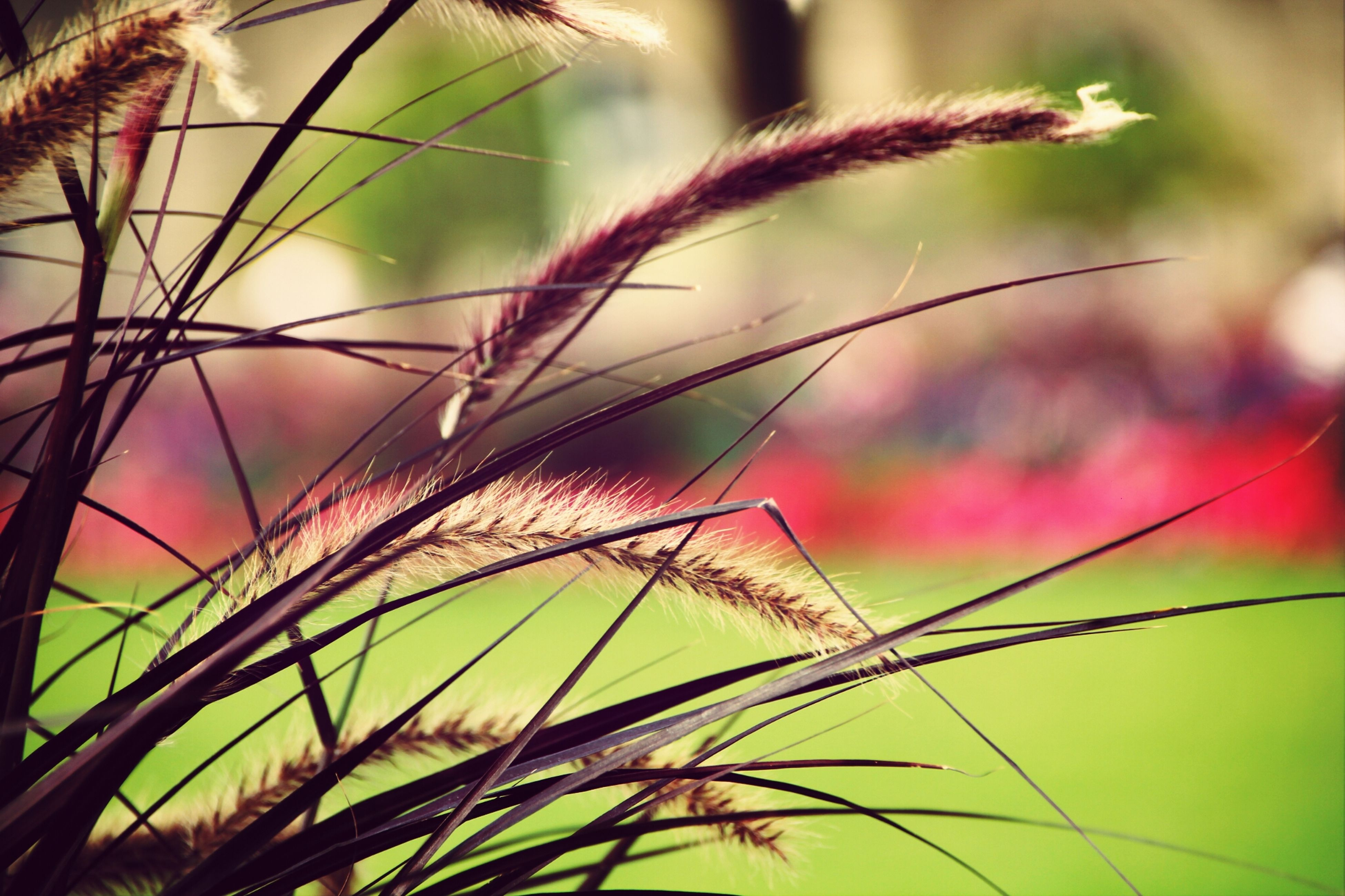 growth, close-up, focus on foreground, plant, nature, fragility, stem, beauty in nature, spiked, flower, freshness, day, leaf, outdoors, thorn, twig, sharp, selective focus, no people, botany