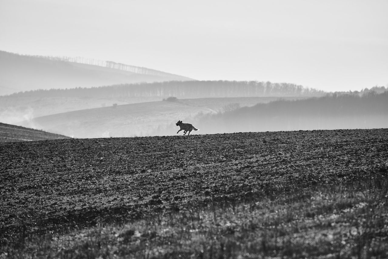 Agriculture Beauty In Nature Blackandwhite Day Dog Enjoying Life Field Freshness Happiness Landscape Mountain Nature Outdoors Pet Photography  Running Rural Scene Scenics Sky