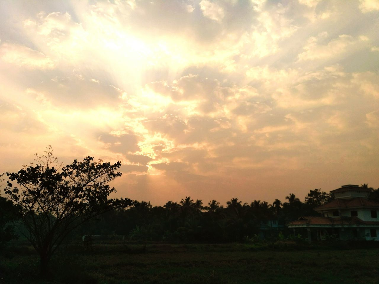 sunset, tree, beauty in nature, nature, sky, scenics, tranquility, no people, tranquil scene, outdoors, field, growth, landscape, day