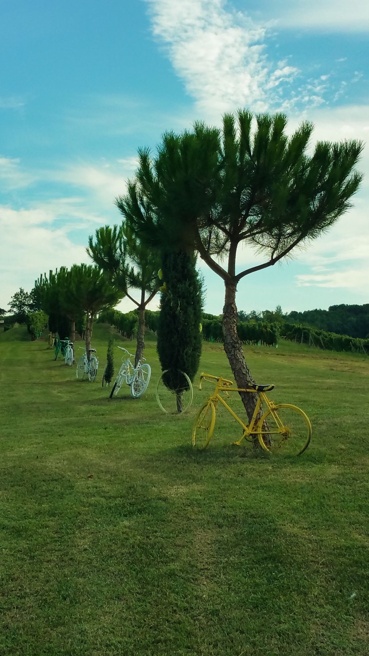 Bicycles. Monbazillac. Bicycle Bicycles Bicycle Parking Bicycling Monbazzilac Landscape Landscape_photography Bicicletta Trasportation Capture The Moment EyeEm Best Shots EyeEm Gallery