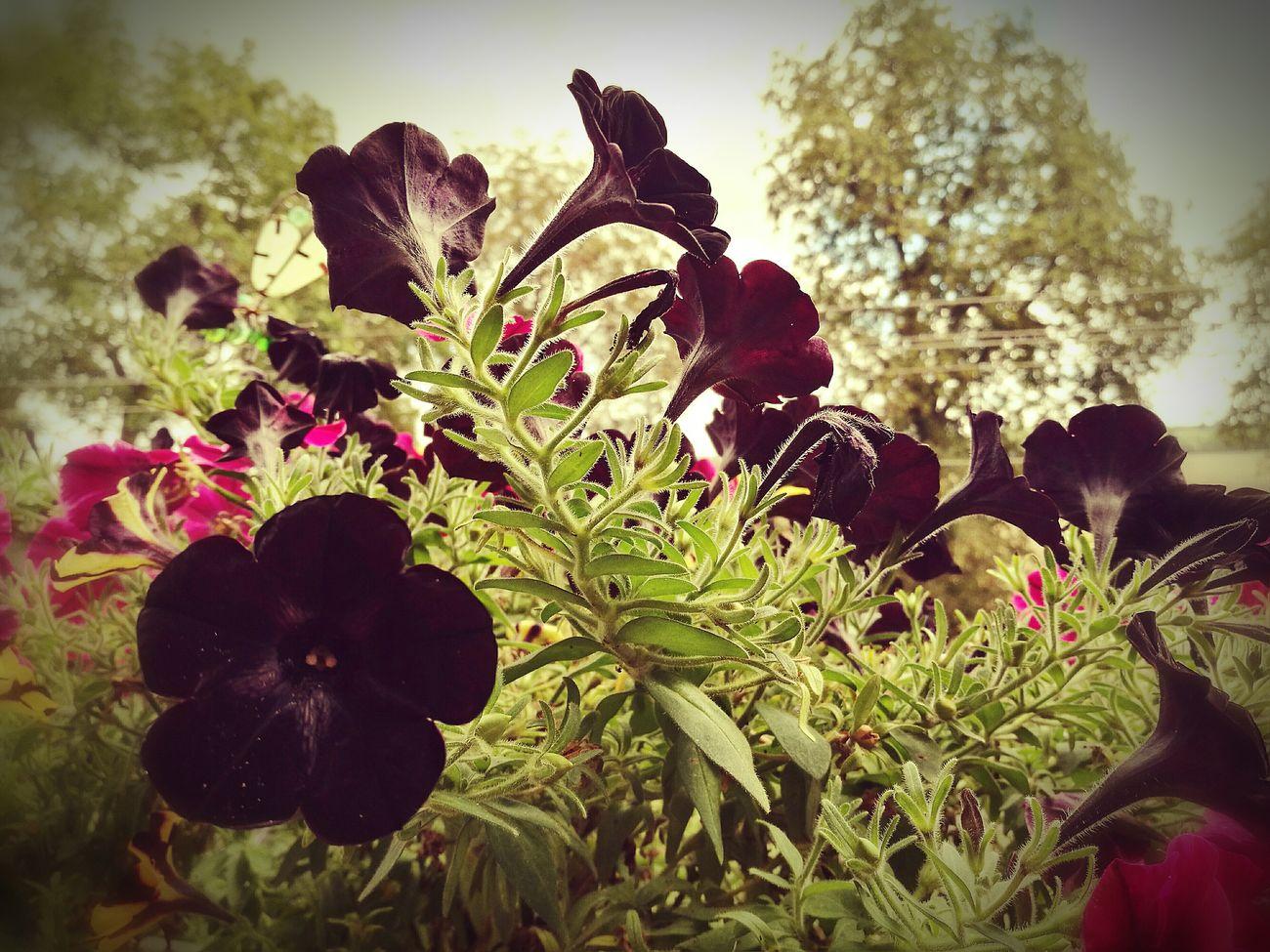 Kwiaty Kolory czarny zielony First Eyeem Photo