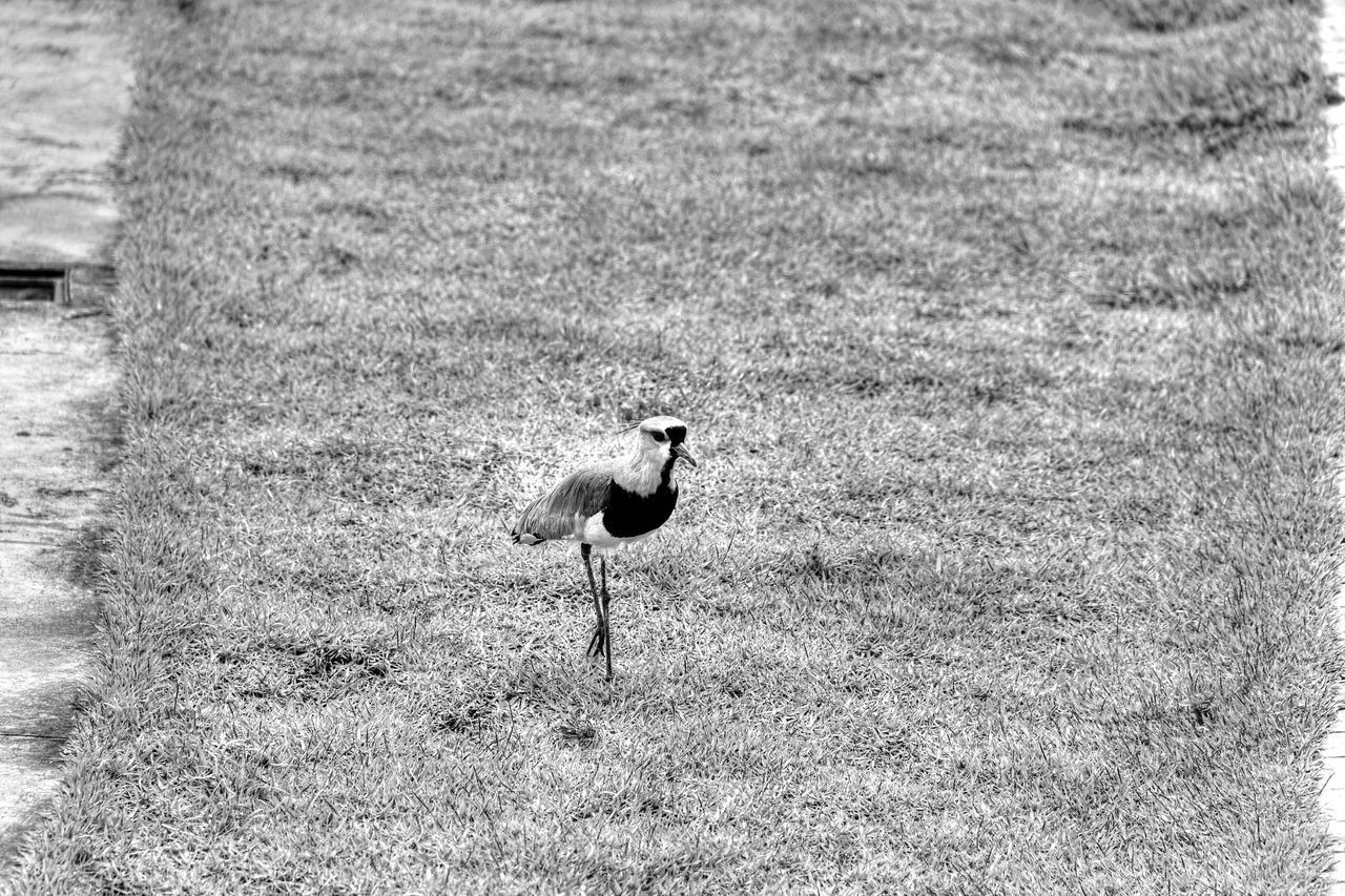 Brasilia city-Brazil Landscape_Collection Brazil - Brasília - DF Brasília - BrazilStreet Photography Monochrome Eyeem Monochrome Black And White Bird Photography Bird Wildlife