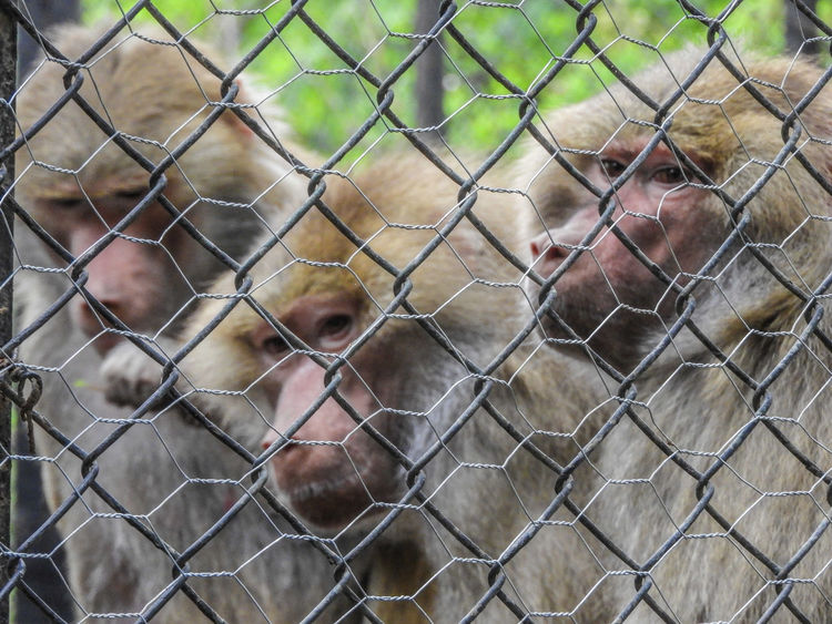 Chainlink Fence Outdoors Day Full Frame Lifestyles Close-up Nature Taiwan Macaco Macaco Monkeys Jail Real People One Man Only One Person Men Only Men People Close-up Adults Only Adult Nature Sky 3 Best Shots EyeEm EyeEm Selects Animal Themes