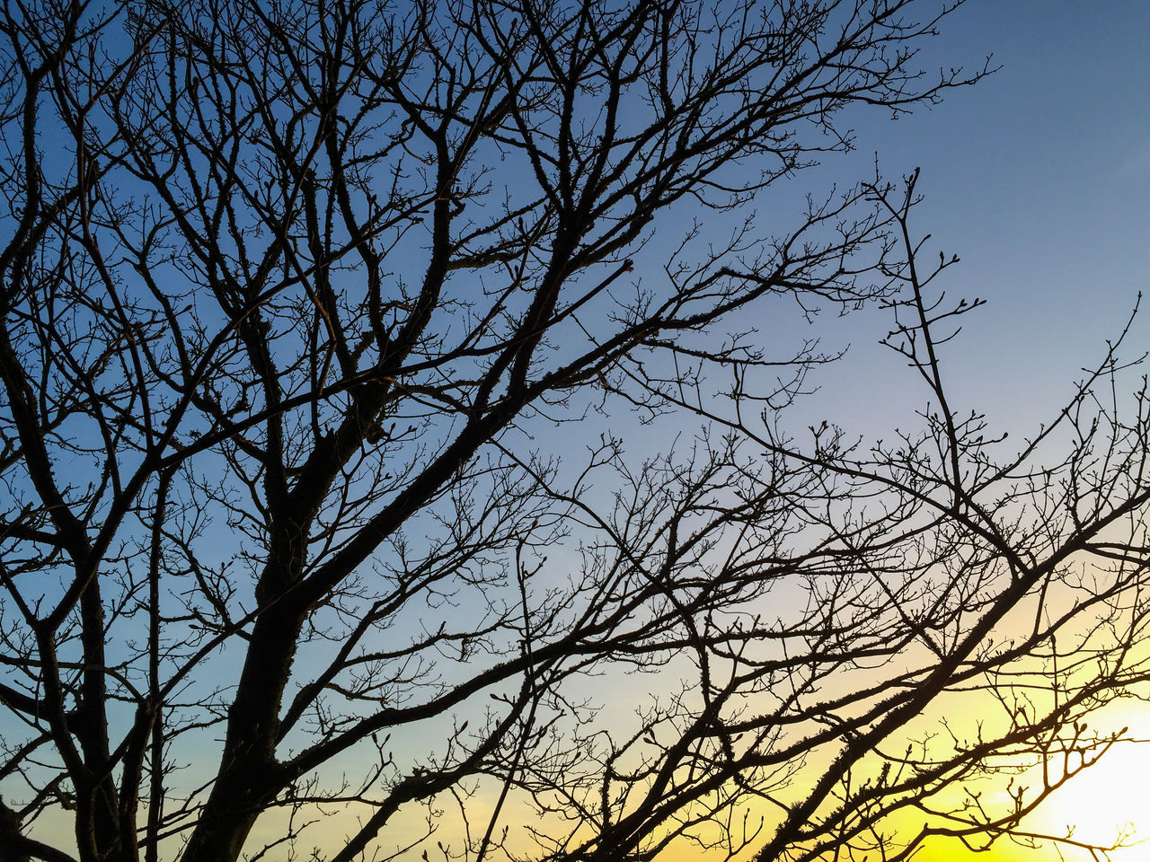bare tree, branch, low angle view, nature, tree, beauty in nature, tranquility, outdoors, no people, sky, scenics, clear sky, day