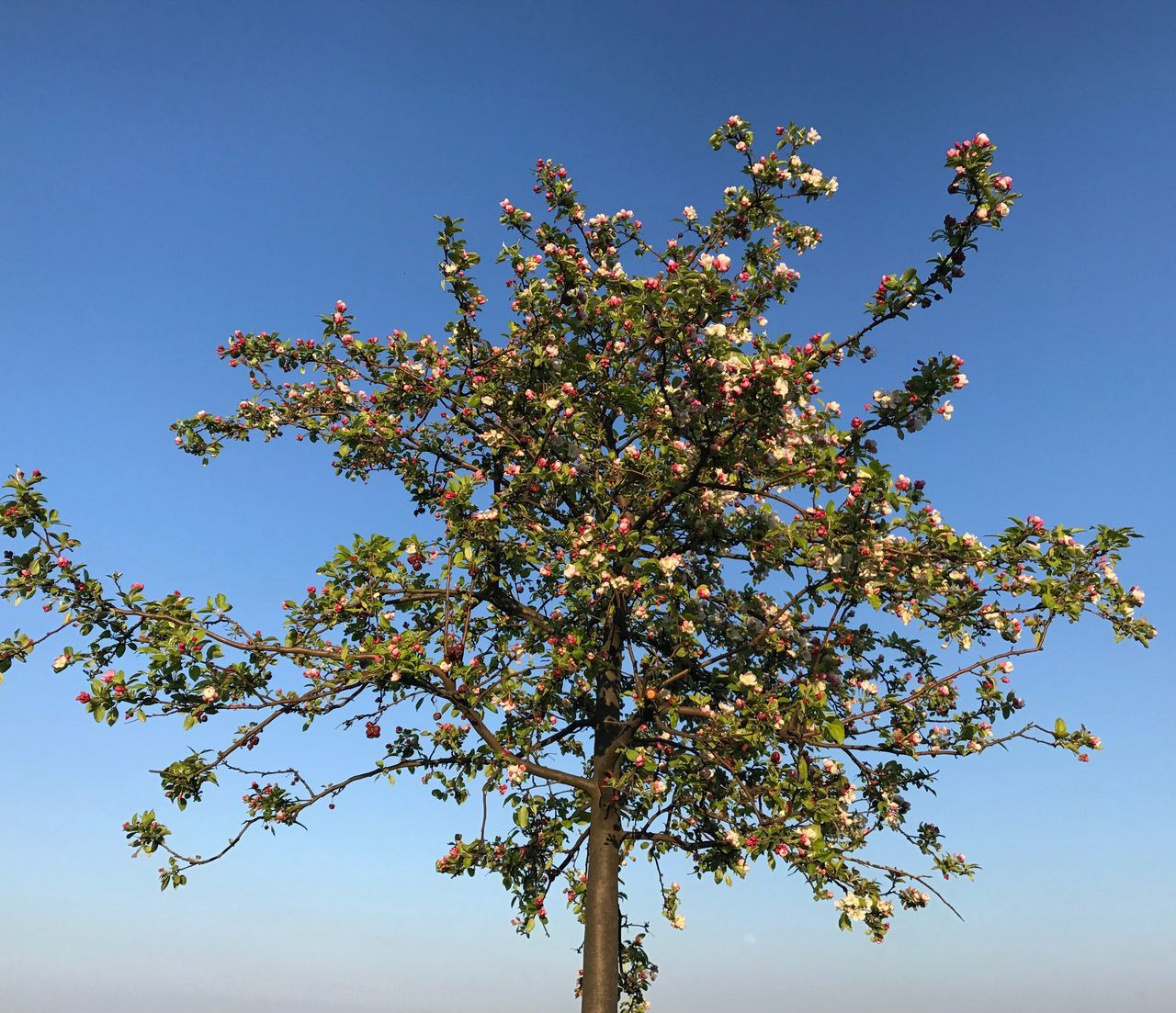 Tree Low Angle View Clear Sky Growth Nature Beauty In Nature Branch No People Outdoors Day Sky Fragility Freshness Nature Spring Beauty In Nature Tree Flower Plum Blossom Growth Spring Is Coming  Leaf Freshness Sunlight Springtime