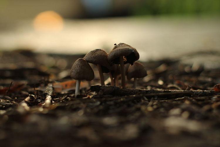 Wood Mushrooms Sunset Close-up No People Summer Warm Outdoors Nature