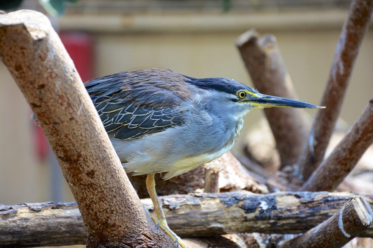 Oceanographic Oceanographic Valencia Bird Photography Birds València SPAIN Oiseaux