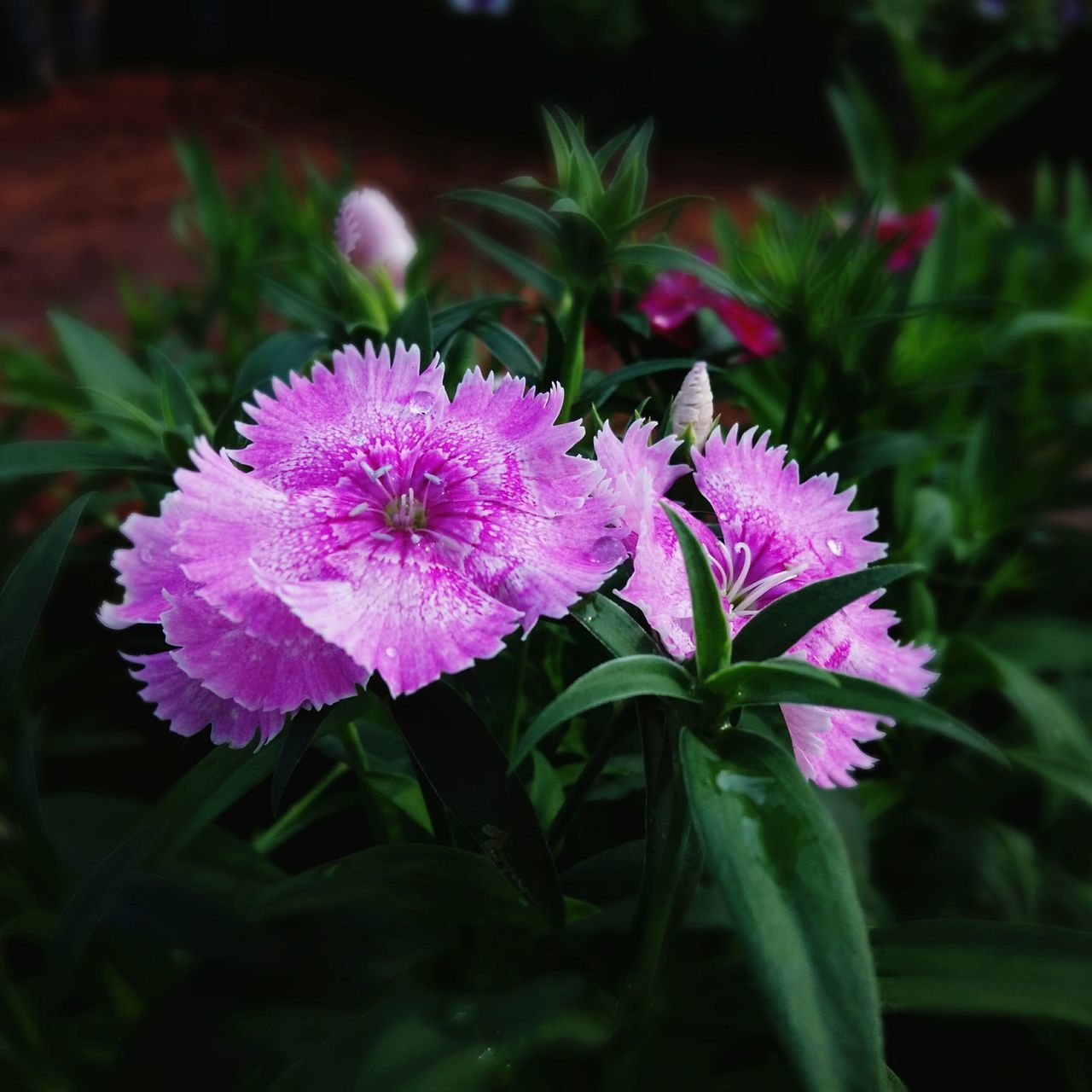flower, growth, petal, nature, fragility, beauty in nature, leaf, plant, no people, freshness, flower head, close-up, pink color, outdoors, day, blooming, green color