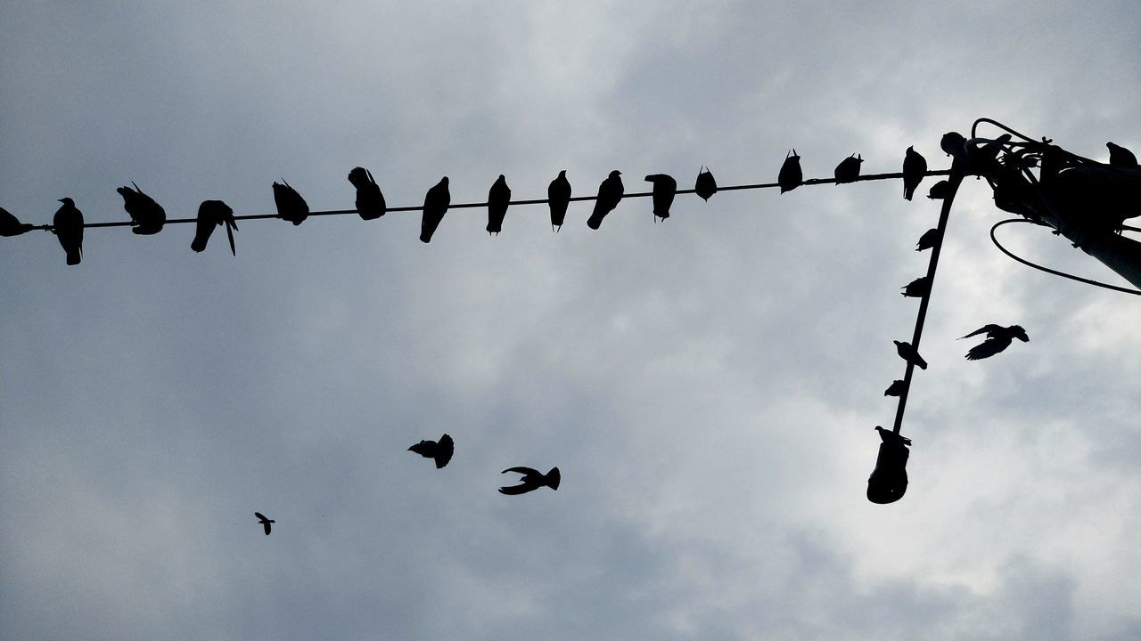 Bird Animals In The Wild Animal Themes Wildlife Low Angle View Silhouette Perching Sky Nature Togetherness Scenics Tranquility Cable Flying Day Cloud - Sky Beauty In Nature Migrating Power Cable Zoology