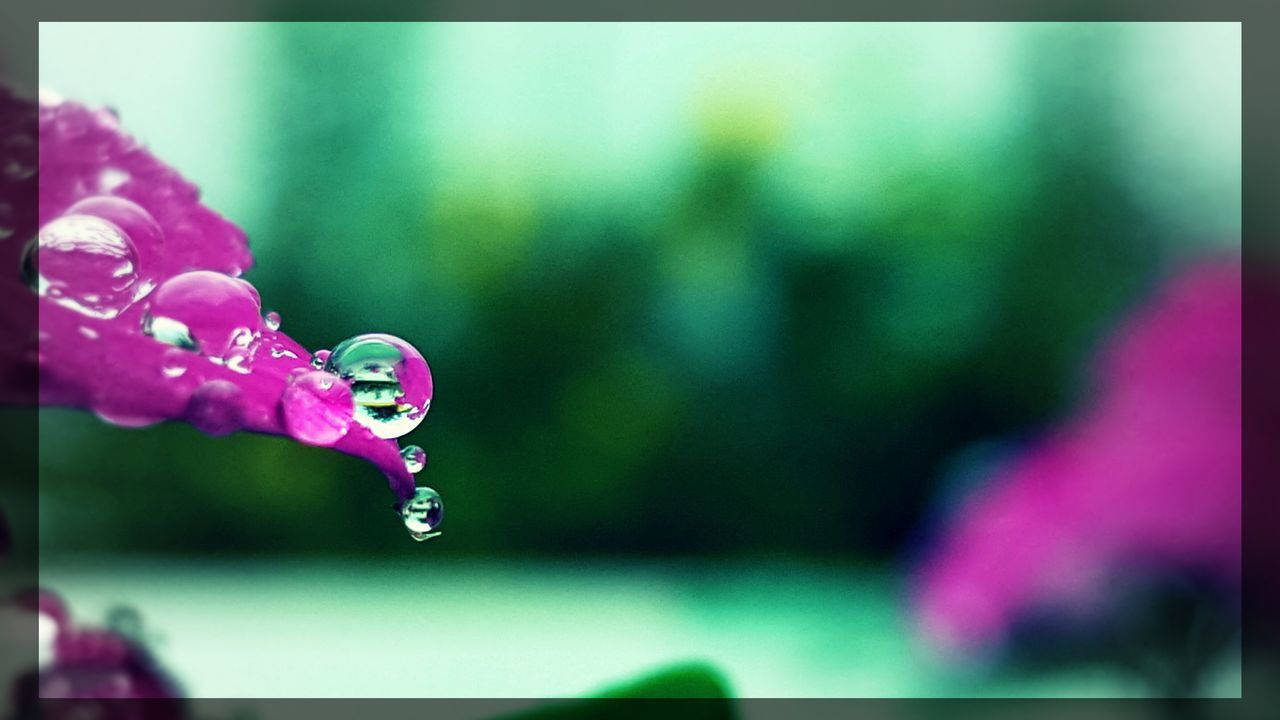drop, water, fragility, wet, focus on foreground, beauty in nature, close-up, nature, raindrop, freshness, selective focus, no people, outdoors, day, purity, flower, dripping, bubble wand