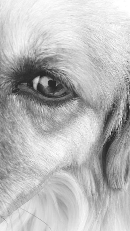 One Animal Close-up Mammal Dog No People Animal Themes Loveanimals❤️ Eyes