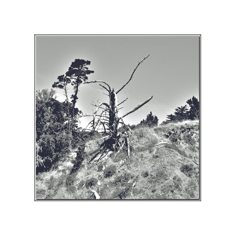 Bare Trees On Angel Island 2 Tiburon, Ca. Trees Branches No Leaves Tree Hillside Bush Clear Sky Monochrome_Photography Monochrome Landscape_Collection Landscape_photography Black & White Black And White Photography Black And White Black And White Collection  Nature Beauty In Nature Nature_collection Landscape Landscape_lovers Low Vegetation Tree Sculpture Conte Crayon Effect
