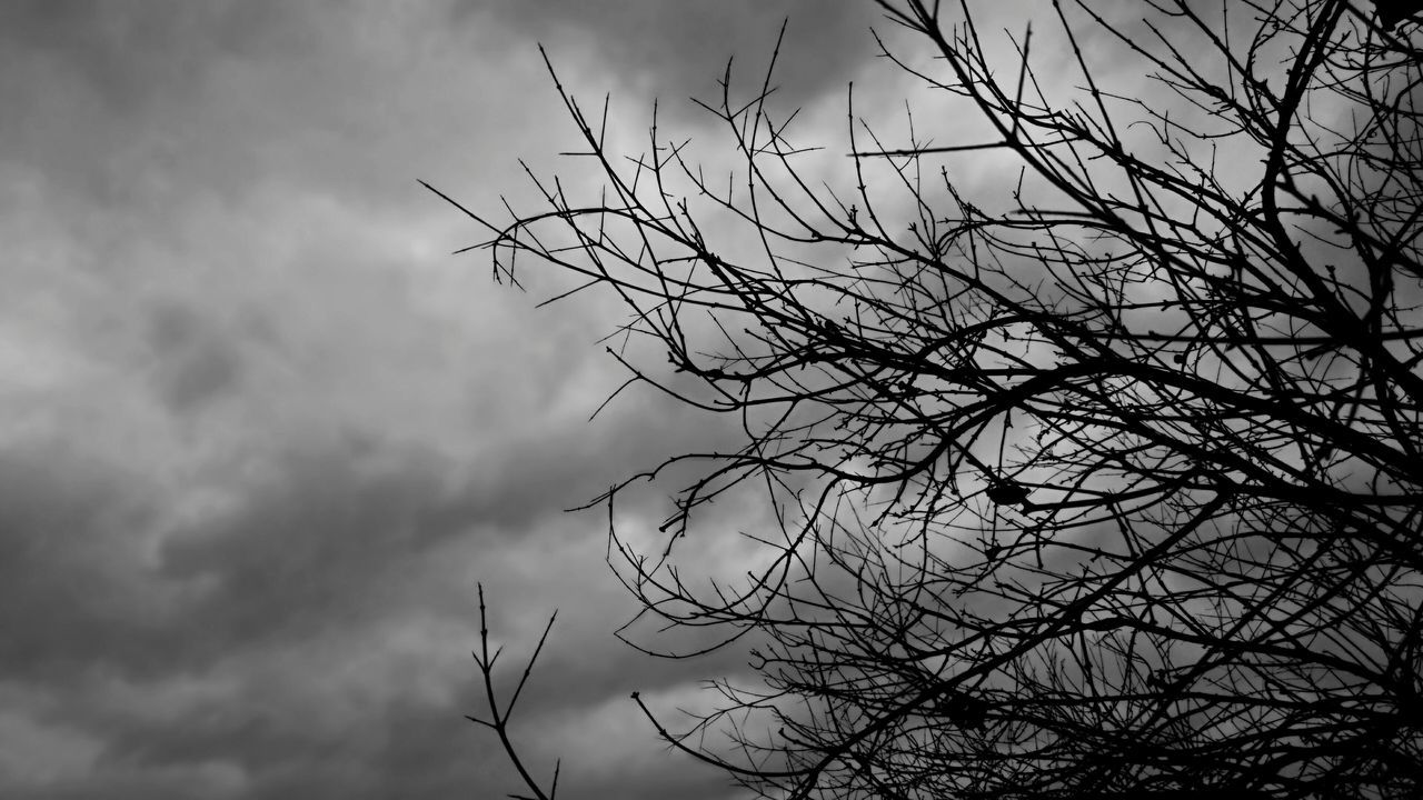 Tree Tree Branches Black And White Monochromatic Cloudy Nature Silhouette Outdoors Day Cloud - Sky Open Edits Monochrome Photography Taking Photos Photography Feeling Creative EyeEm Best Shots Light And Shadow Rainy Days Gloomy Sky Gloomy Weather Feeling Blue The Great Outdoors Gray Sky Gray Black