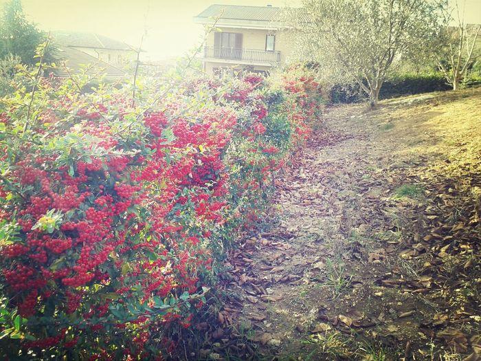 ♥♡♥♡ Taking Photos Garden Nature Beautiful
