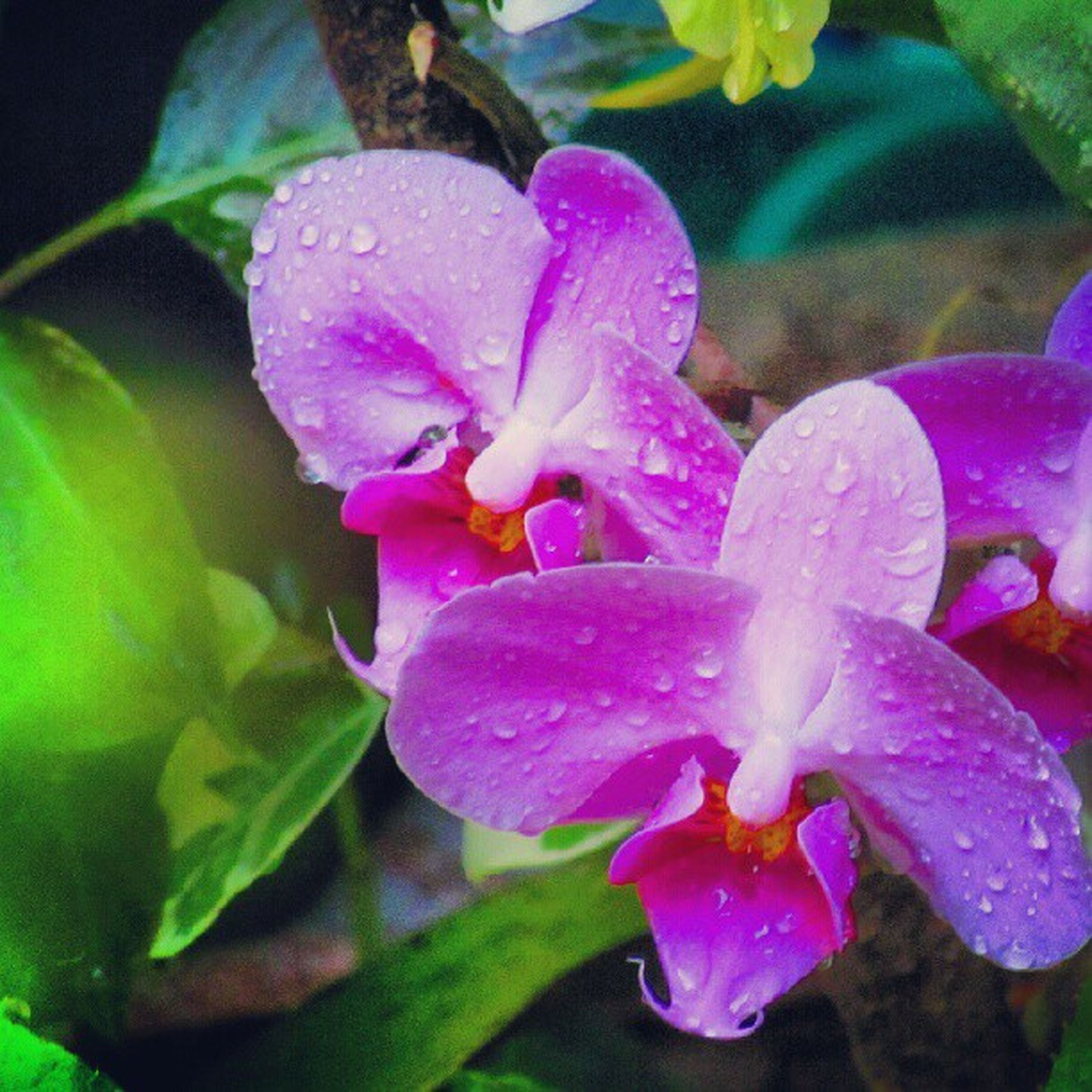 flower, freshness, petal, fragility, water, drop, growth, flower head, beauty in nature, close-up, wet, plant, blooming, nature, focus on foreground, pink color, leaf, purple, in bloom, pollen