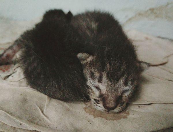 Just sleep and sleep. Cat Kittens One Animal Mammal Animal Wildlife Animal Themes Lying Down Close-up
