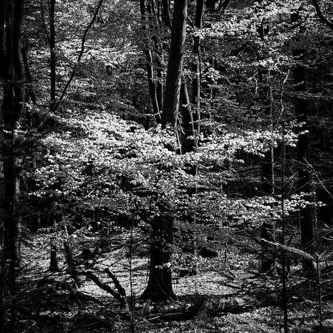 Black & White Blackandwhite Monochrome Nature Nature_collection EyeEm Nature Lover Nature Photography