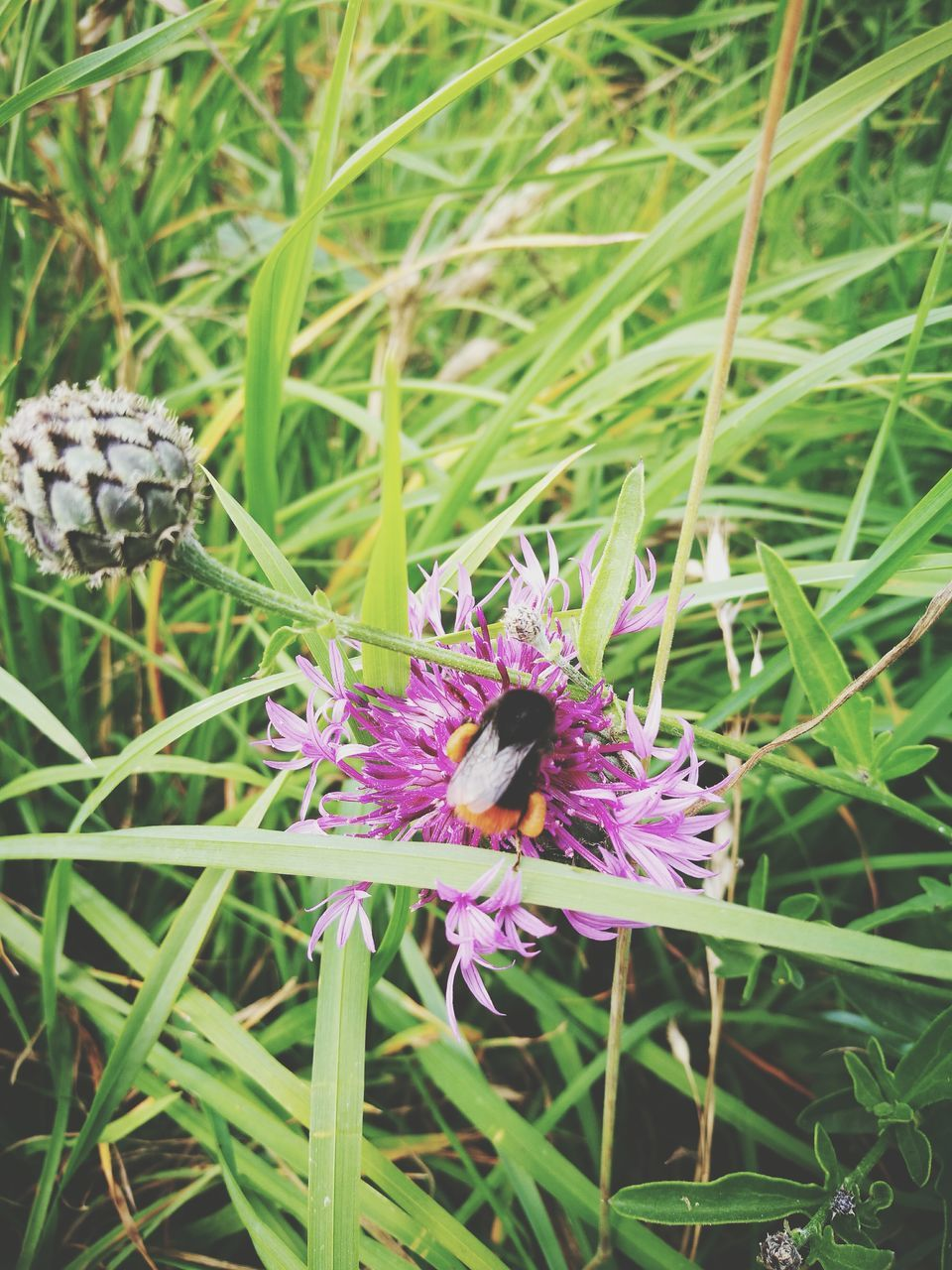flower, nature, insect, animal themes, growth, one animal, plant, beauty in nature, animals in the wild, grass, purple, fragility, no people, day, outdoors, freshness, green color, petal, close-up, flower head, pollination