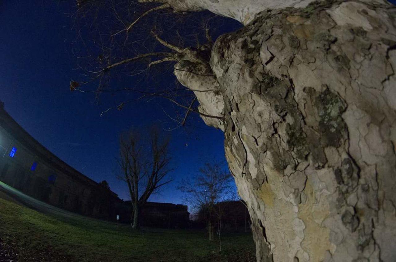 Alessandria Cittadella Nightphotography Nightlights Tree No People Samyang8mm Pentax K5ll Tranquility Star - Space Tree Blue Sky