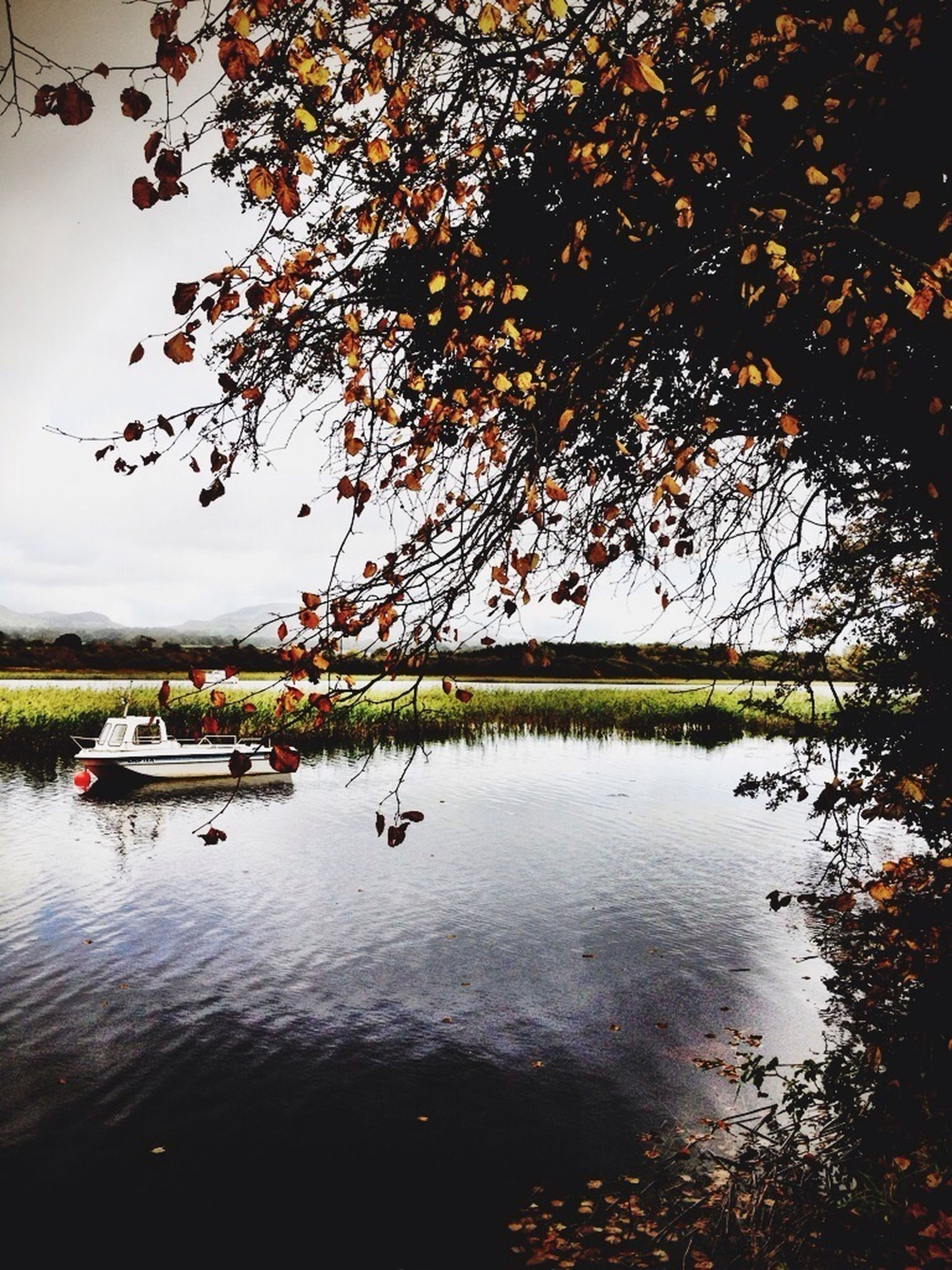 water, nautical vessel, tree, boat, transportation, mode of transport, reflection, lake, tranquility, tranquil scene, waterfront, nature, scenics, beauty in nature, sky, moored, branch, river, growth, idyllic