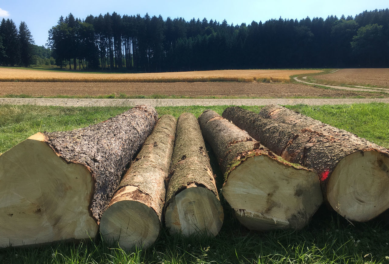 Die Fünf Stämme Day Field Forestry Industry Fuel And Power Generation Grass Hay Bale Heap Industry Landscape Log Nature No People Outdoors Pile Stack Timber Tree