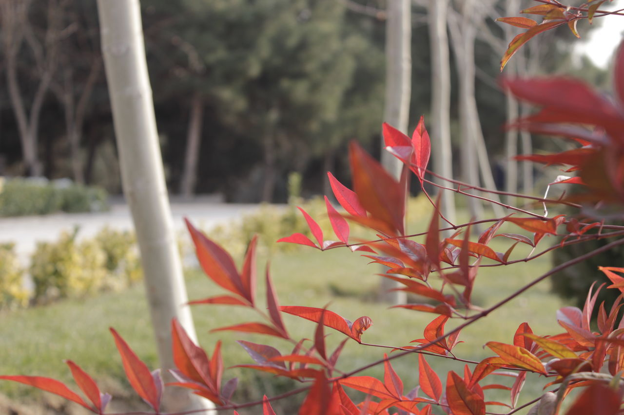plant, growth, nature, red, flower, no people, beauty in nature, outdoors, day, close-up, fragility, leaf, freshness, flower head