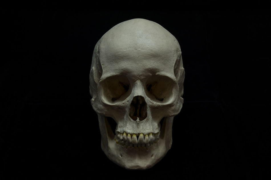 Beautiful stock photos of totenkopf, Anatomical Model, Black Color, Concepts And Topics, Danger