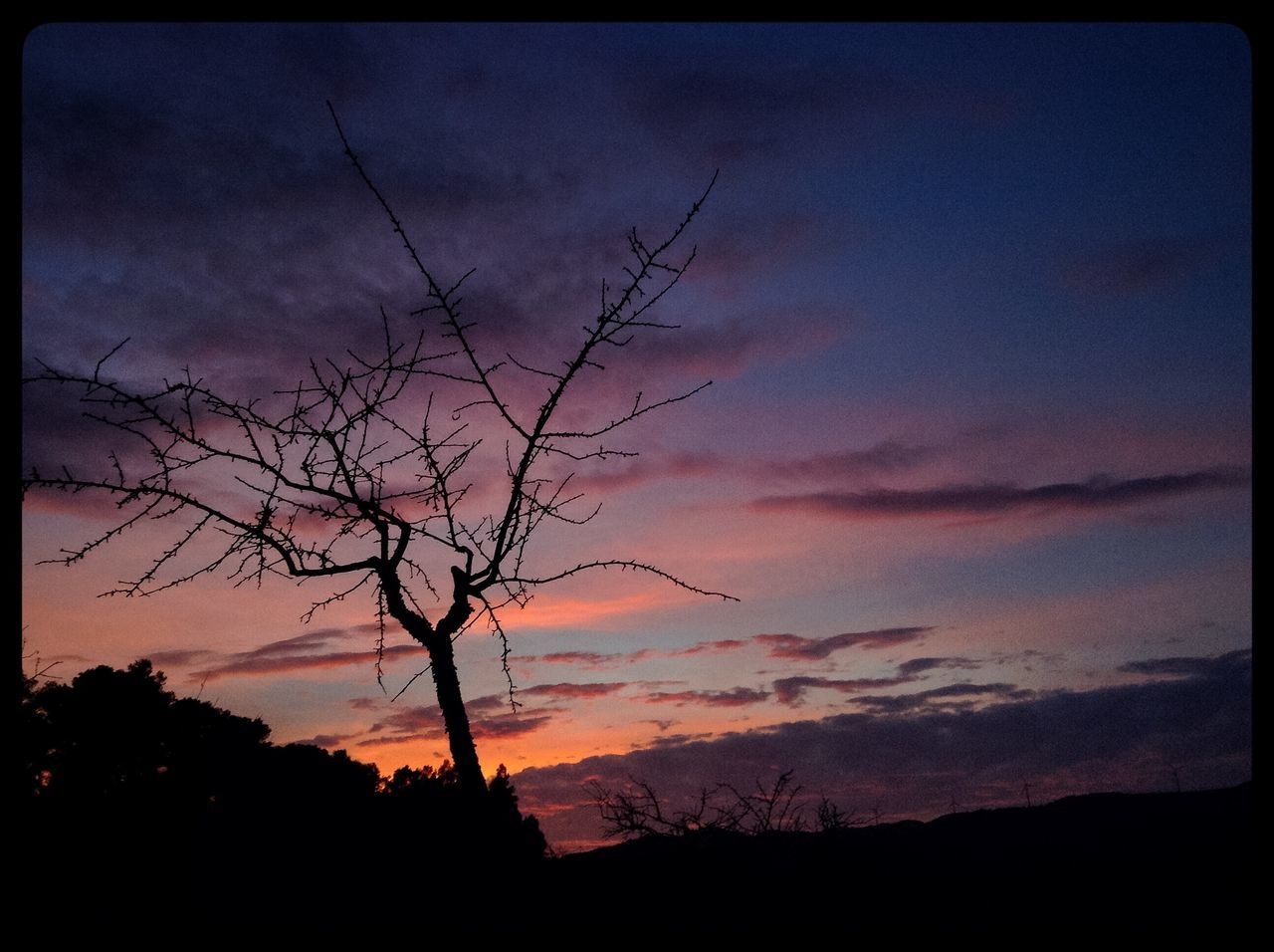 sunset, silhouette, sky, beauty in nature, tranquility, majestic, tranquil scene, nature, scenics, tree, cloud - sky, no people, outdoors, bare tree, landscape, low angle view, branch, day