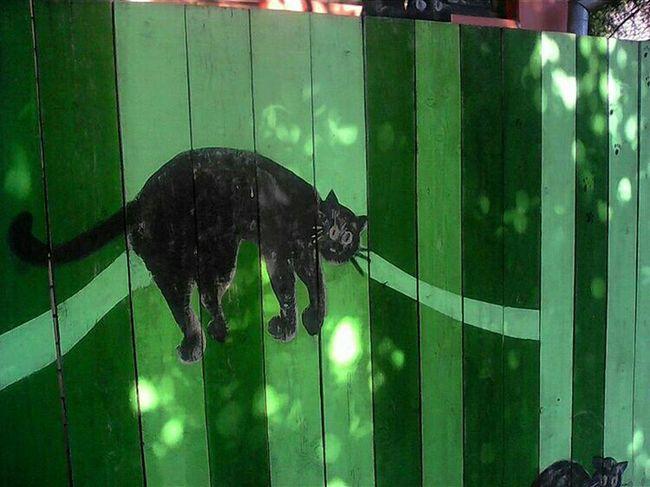 кото_фото Котозабор улицаКропоткина Starting A Trip Cat Taking Photos Boarding забор Дмитров Cradle