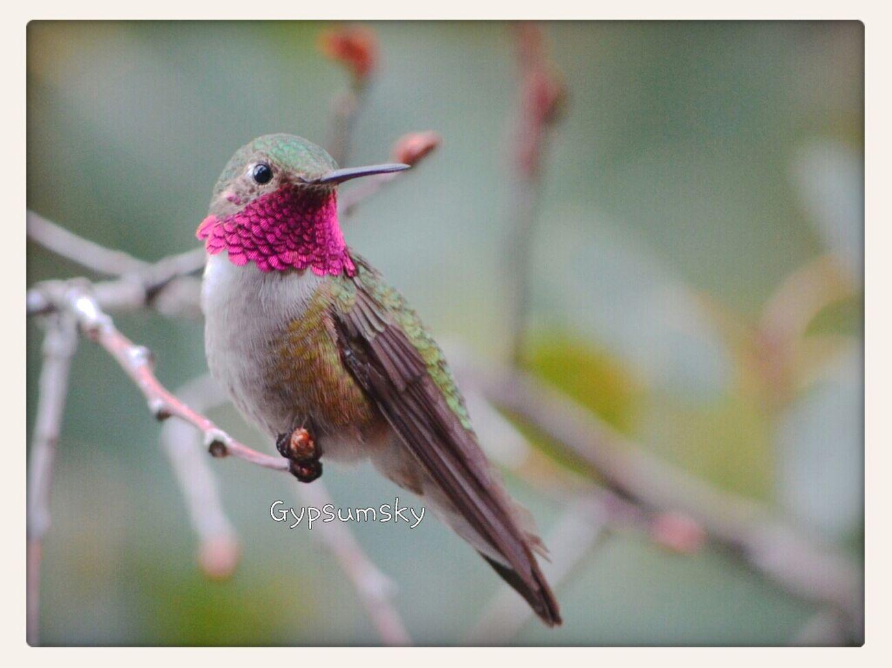 Birds Wildlife Eye4photography