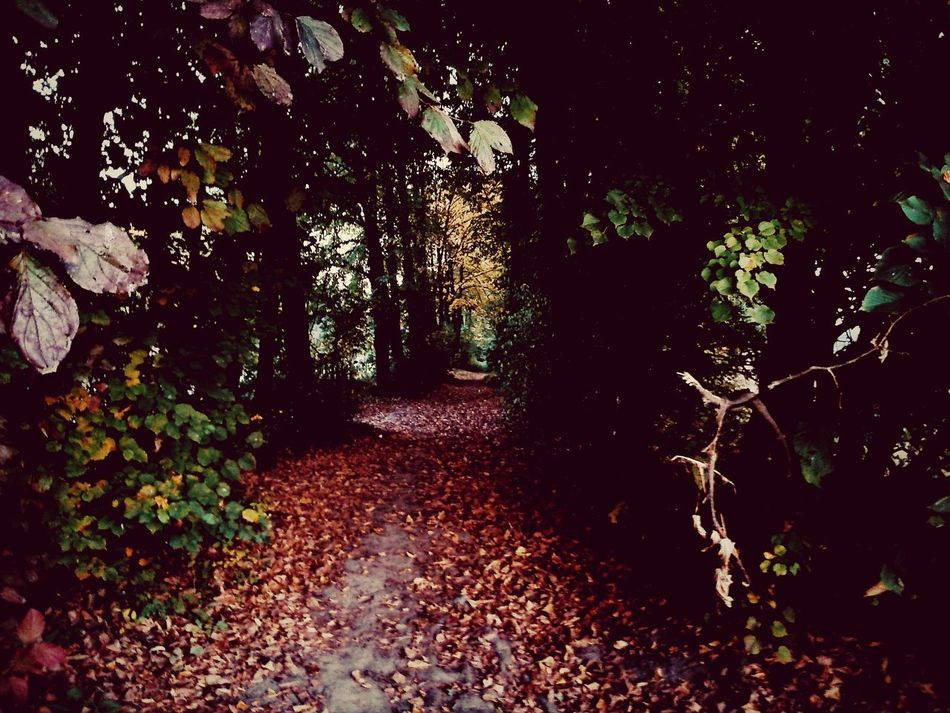 Go ahed and never turn back... Autumnleaves Beautiful Autumn Autumn Melancholy Trees